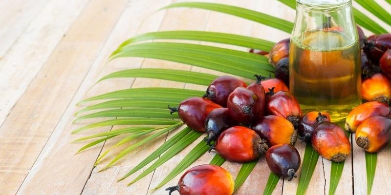 Пальмовое масло-мифы и реальность