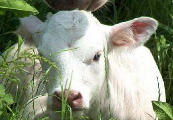 Утверждены единые ветеринарные (ветеринарно-санитарные) требования, предъявляемые  к объектам, подлежащим ветеринарному контролю (надзору)